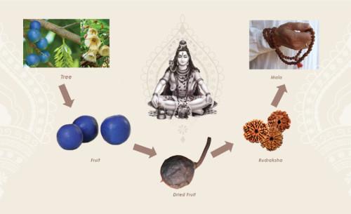 rudraksha-process