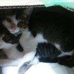 【ぬこネコ日記】:新しい家族(子猫)