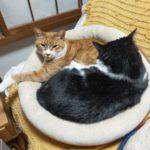 【ぬこネコ日記】:猫たちの近況